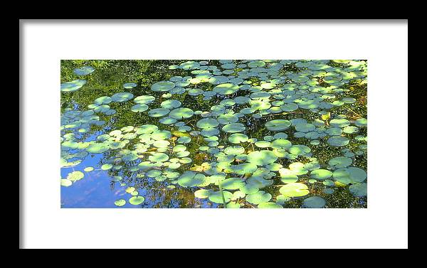 Water Photo Framed Print featuring the photograph Lilypads by Sarah Gayle Carter