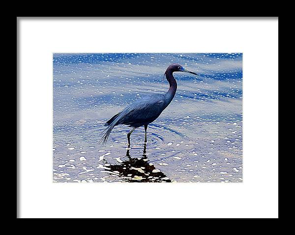 Little Blue Heron Framed Print featuring the photograph Lit'l Blue by Elizabeth Winter