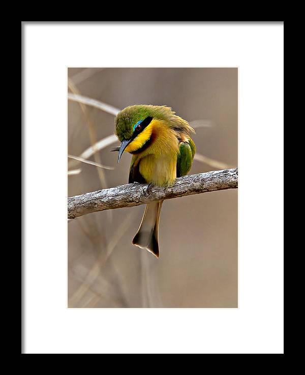 Bird Framed Print featuring the photograph Little Bee Eater by Michael Moss