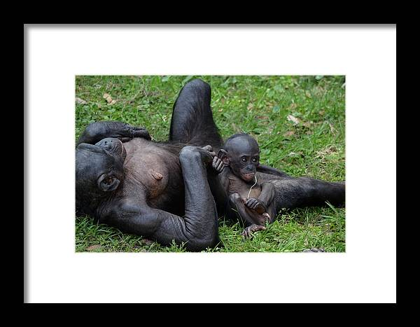 Apes Framed Print featuring the photograph Little Bright Eyes by Kathy Gibbons