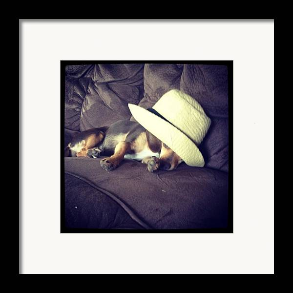 Framed Print featuring the photograph Little Guy Was So Tired He Fell Asleep by Stephanie Brown