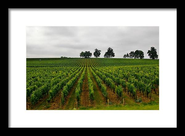 Vineyard Framed Print featuring the photograph Little Hill In The Vineyard by Christine Burdine