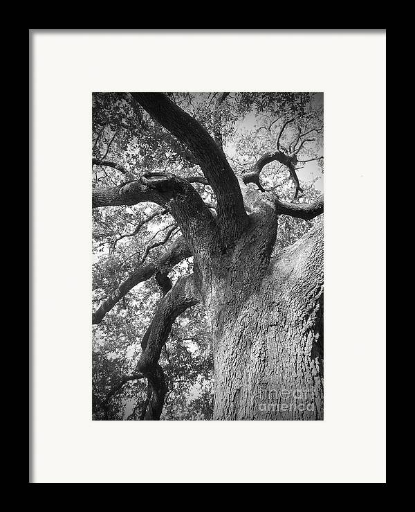 New Orleans Framed Print featuring the photograph Live Oak by Waverley Manson