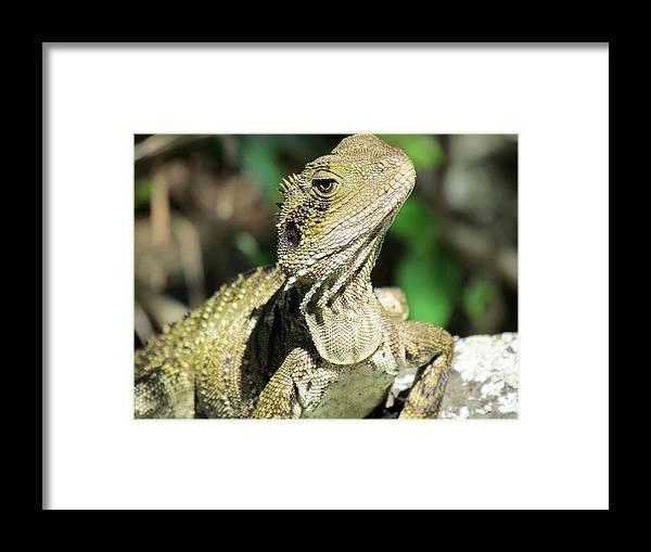 Lizard Framed Print featuring the photograph Lizard by Joyce Woodhouse