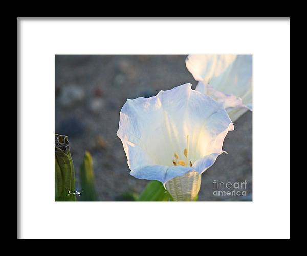 Roena King Framed Print featuring the photograph Loco Weed Flowers 1 by Roena King