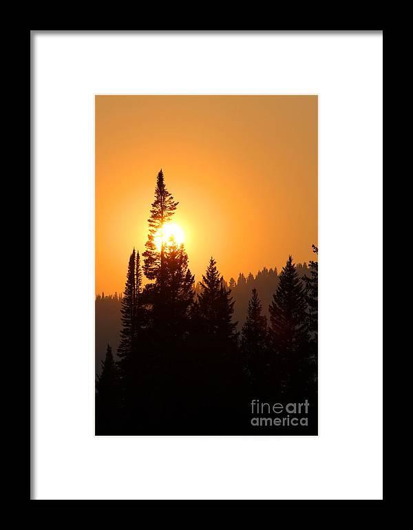 Yellowstone Sunset Framed Print featuring the photograph Lodgepole Sundown by Kurt Holtzen