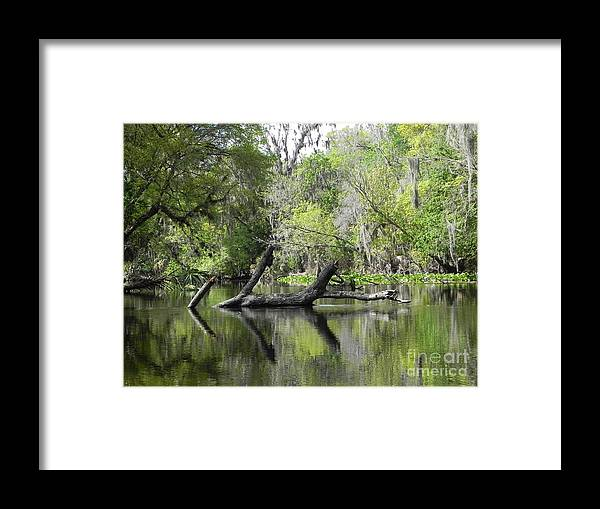 Wekiva Framed Print featuring the photograph Log Block by Jack Norton