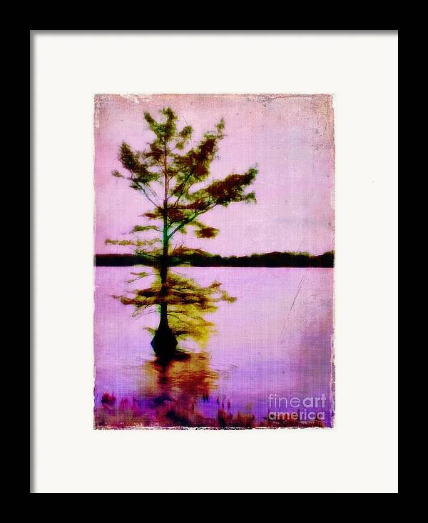 Louisiana Framed Print featuring the photograph Lone Cypress by Judi Bagwell