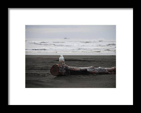 Gull Framed Print featuring the photograph Lone Gull by Michael Merry