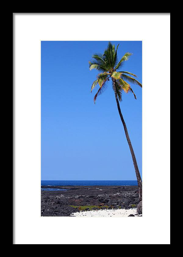 Palms Framed Print featuring the photograph Lone Palm by Tony and Kristi Middleton