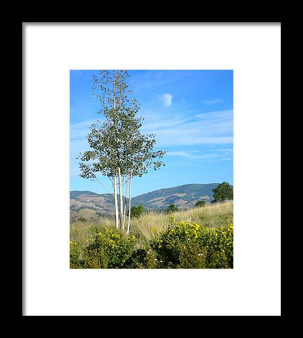 Landscape Photo Framed Print featuring the photograph Lone Tree Colorado by Sarah Gayle Carter