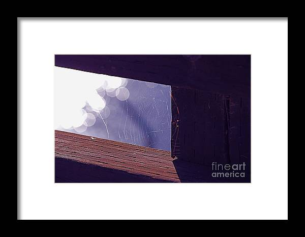 Spiderweb Framed Print featuring the photograph Lone Web by Polly Villatuya