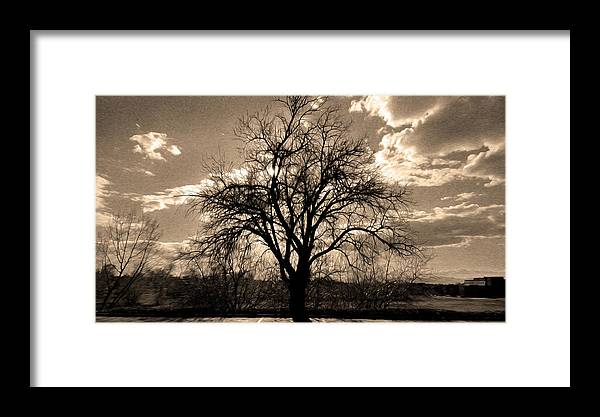 Sunset Framed Print featuring the digital art Lonely Tree At Sunset by Sergio Aguayo