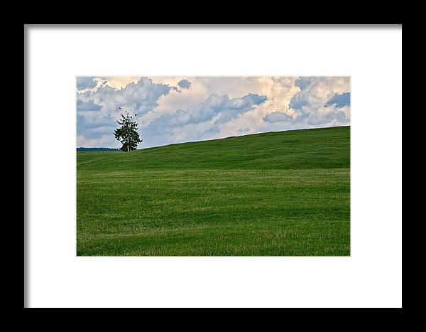 Landscape Framed Print featuring the photograph Lonely Tree by Zoran Buletic