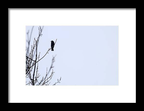 Black Bird Framed Print featuring the photograph Lonesome Me by Wanda Brandon