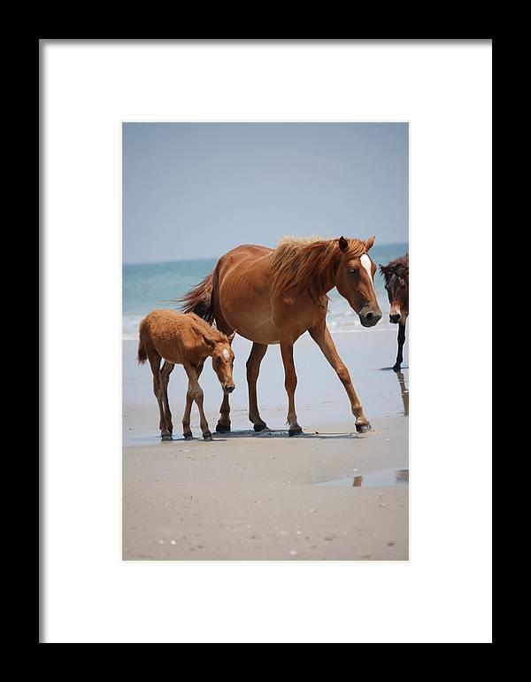 Corolla Wild Horses Photograph Framed Print featuring the photograph Long Walks On The Beach by Kristine McNamara