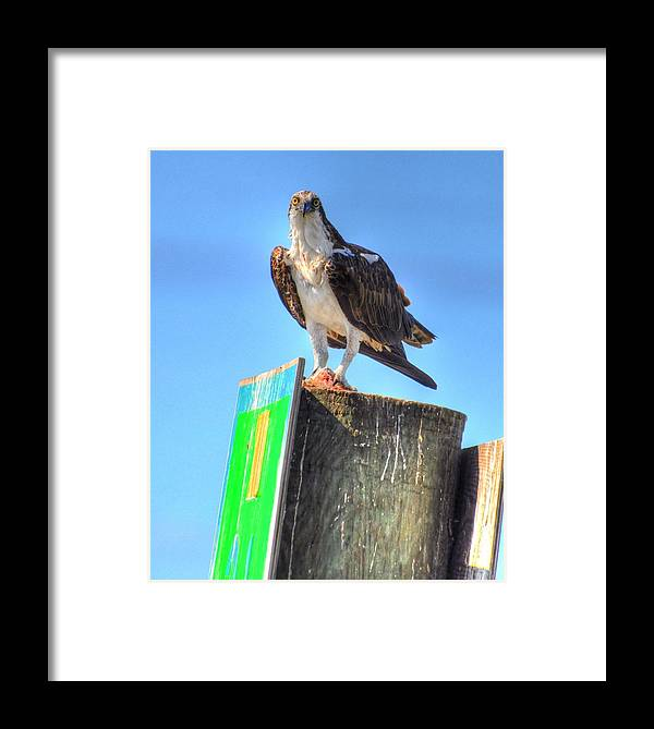 Great Blue Heron Framed Print featuring the digital art Look Out by Barry R Jones Jr