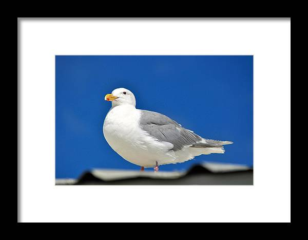 Seagulls Framed Print featuring the photograph Look Out by Debra Miller