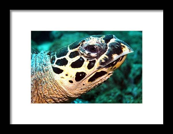 Framed Print featuring the photograph Looking At You by Richard Morris