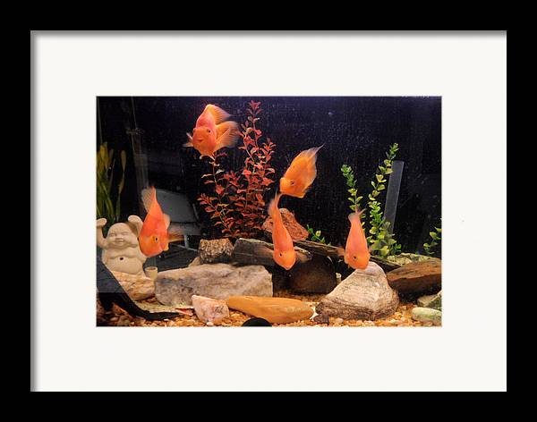 Fish Framed Print featuring the photograph Looking At You by Val Oconnor