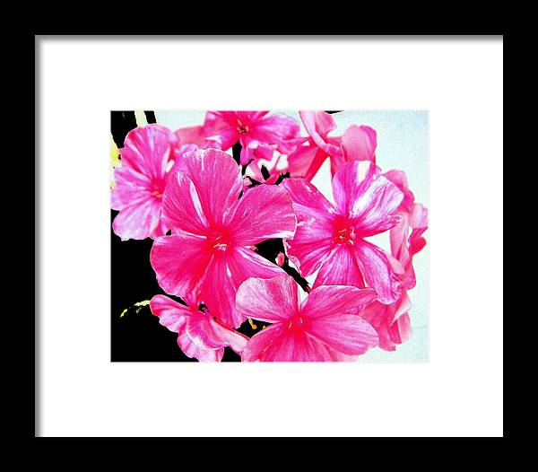 Flower Framed Print featuring the photograph Looking On The Bright-side by April Patterson