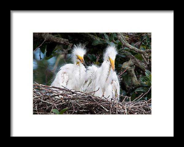Wildlife Framed Print featuring the photograph Looking Out At The World by Kenneth Albin