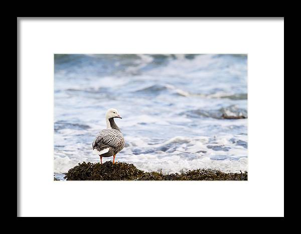 Adult Framed Print featuring the photograph Looking Out To Sea by Tim Grams