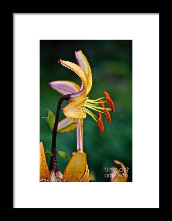 Garden Framed Print featuring the photograph Looking Right by Susan Herber