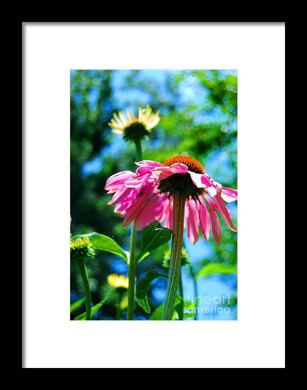 Flowers Framed Print featuring the photograph Looking Up by Linda Mesibov