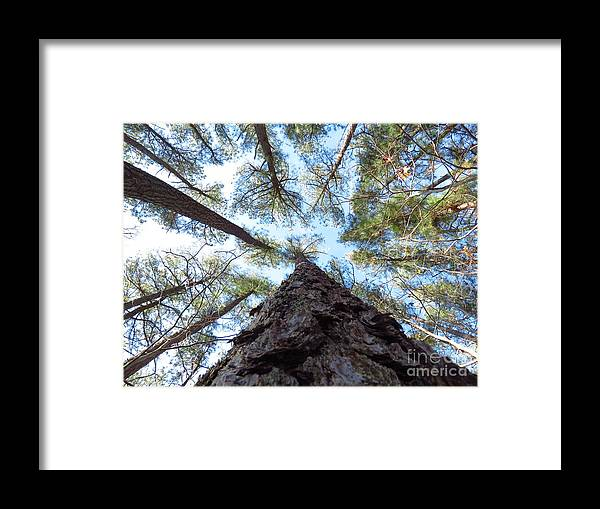 Trees Framed Print featuring the photograph Looking up by Rrrose Pix