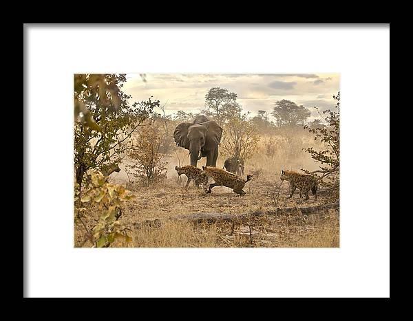 Elephants Framed Print featuring the photograph Loosin Battle by Jennifer