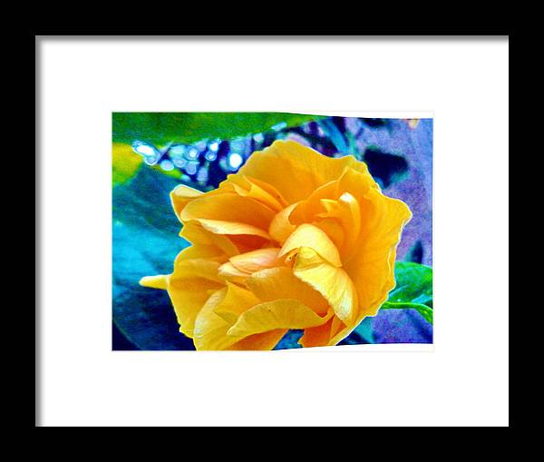 Flower Framed Print featuring the photograph Lost In Garden by Beto Machado