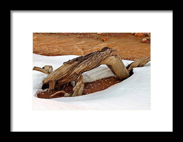 Wood Framed Print featuring the photograph Lost My Contacts by Michael Cinnamond