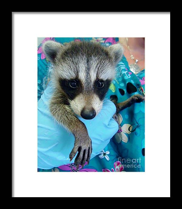 Nature Framed Print featuring the photograph Love At First Sight by Art Dingo