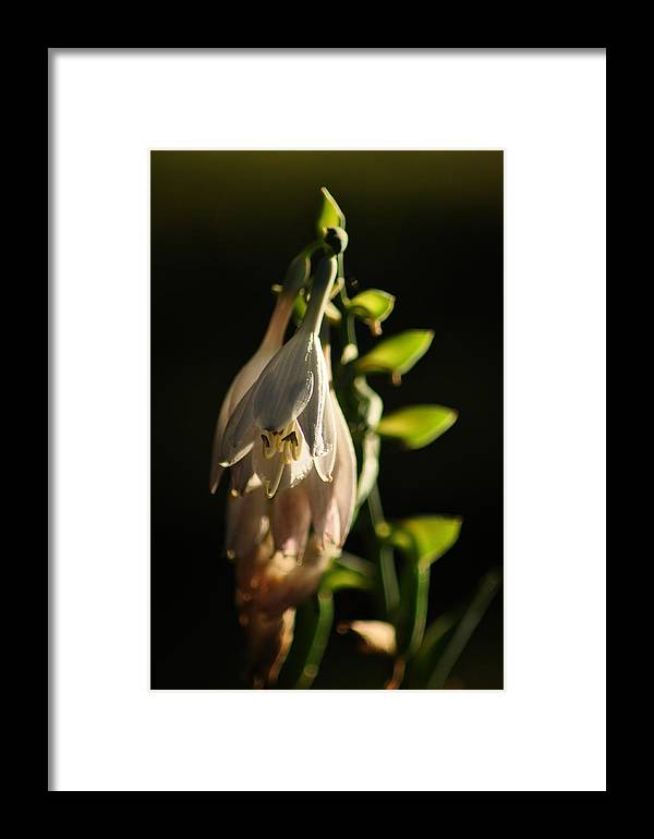 Framed Print featuring the photograph Love At Light by Dominic Stringer