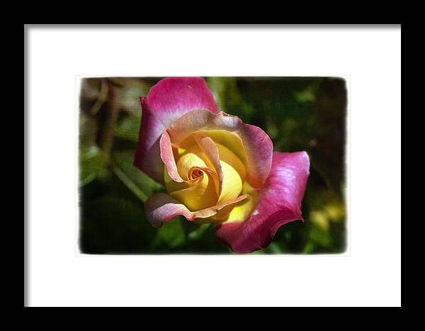 Florals Framed Print featuring the photograph Love N Peace by Linda Dunn