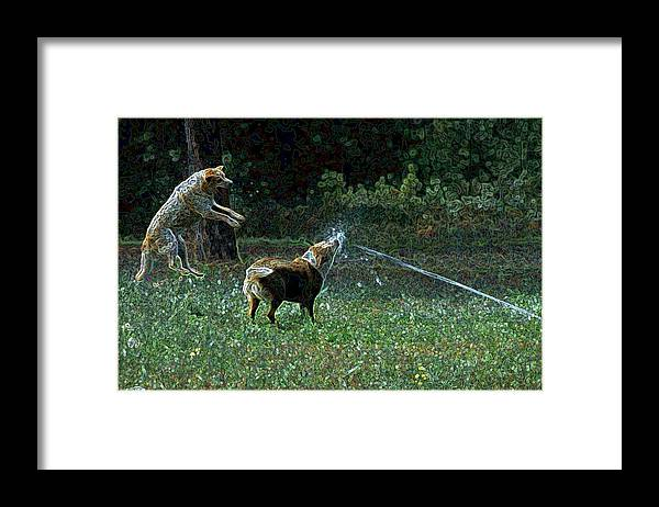 Austalian Cattle Dog Framed Print featuring the photograph Love To Play by One Rude Dawg Orcutt