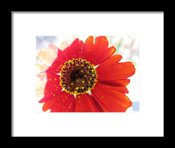 Flowers Framed Print featuring the photograph Lovely Effects by Tina M Wenger