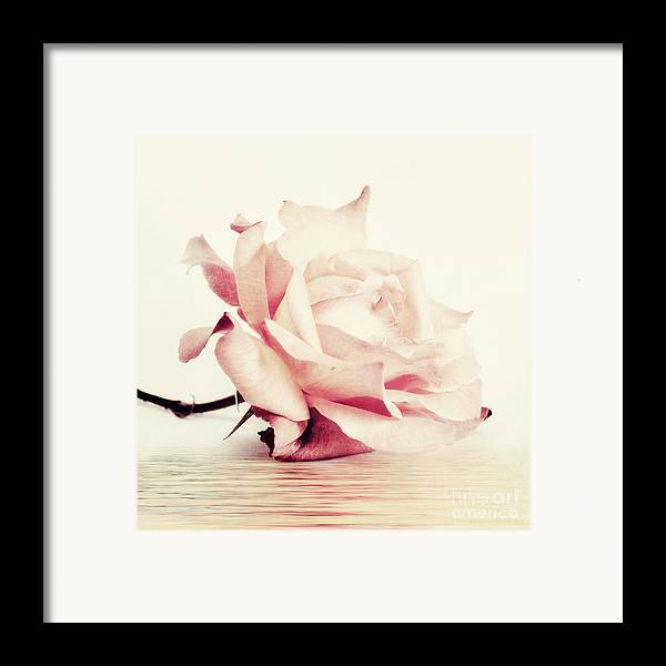 Rose Framed Print featuring the photograph Lucid by Priska Wettstein