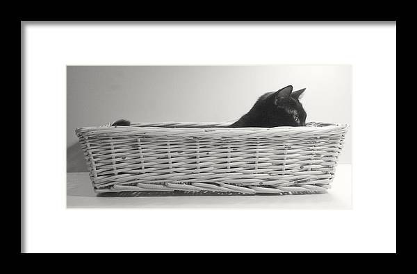 Cat Framed Print featuring the pastel Lurking In The Basket by Bernadette Kazmarski