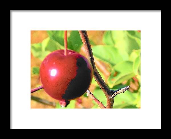 Fruit Framed Print featuring the digital art Luscious Fruit by Wide Awake Arts