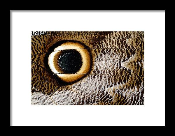 Caligo Idomeneus Framed Print featuring the photograph Macrophotograph Of Owl Butterfly Wing by Dr Keith Wheeler