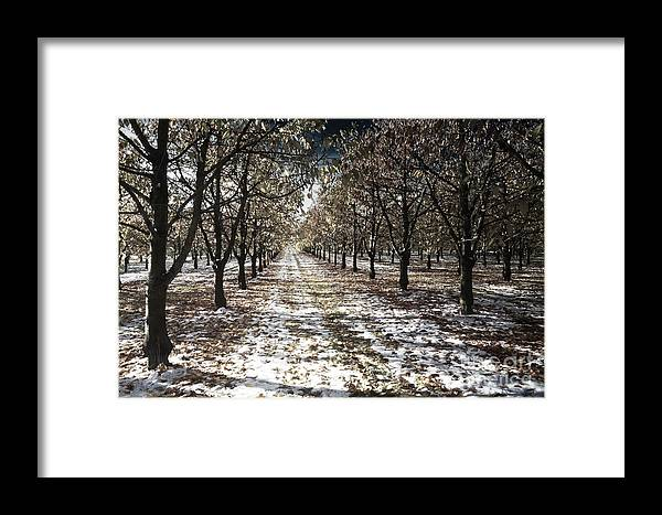 Play Of Colour Framed Print featuring the photograph Magic by Bruno Santoro
