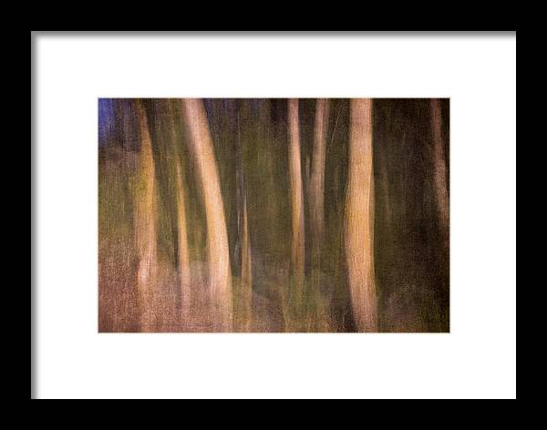 Landscapes Framed Print featuring the photograph Magical Wood by Guido Montanes Castillo