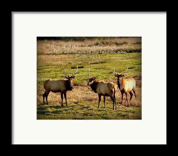 Cindy Framed Print featuring the photograph Magnificent Bull Elk Psalm 50 by Cindy Wright