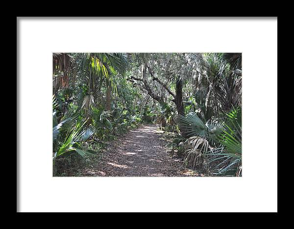 Washington Oaks Gardens State Park Framed Print featuring the photograph Mala Compra Trail by Tiffney Heaning