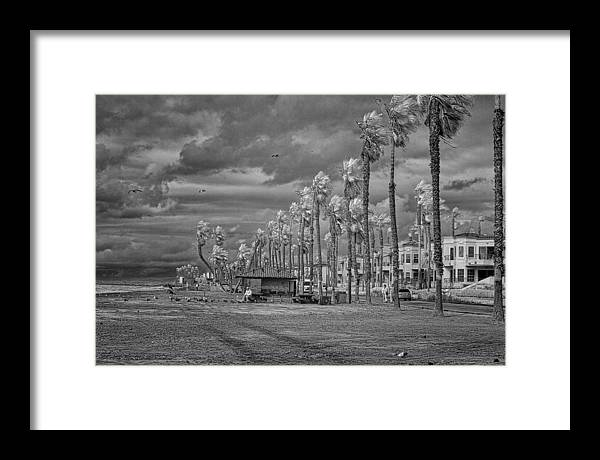 Seagulls Framed Print featuring the photograph Man And Gulls by Hugh Smith