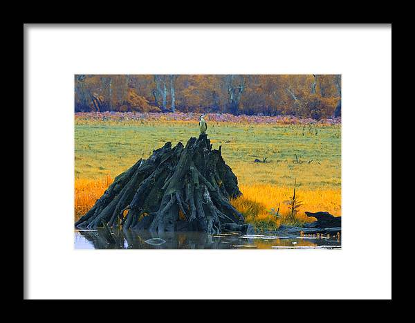 Dead Mangrove Tree Framed Print featuring the photograph Mangrove Lookout by Douglas Barnard