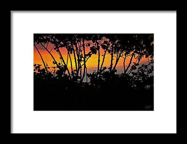 Sunset Framed Print featuring the photograph Mangrove Sunset by Christine Stonebridge