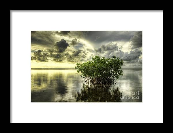 Mangrove Framed Print featuring the photograph Mangroves I by Bruce Bain